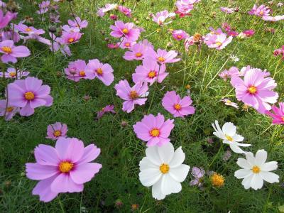 どの花も 可愛い