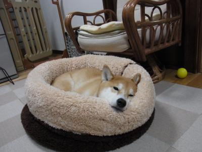 じゃあ、寝てみますか…