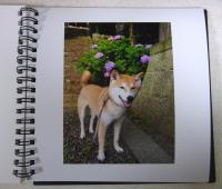 紫陽花(惣河内神社)