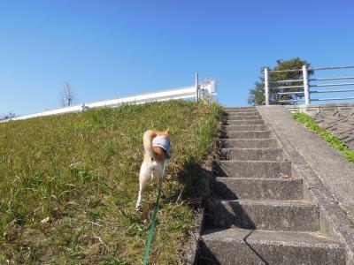 「なんだ坂 こんな坂…」