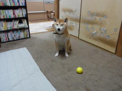 遊んでください!