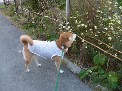 お散歩 出発~!