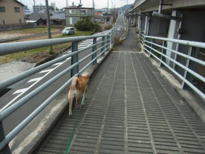 元気に 歩いて行きます。