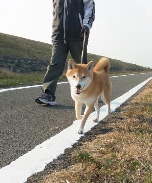 どこまででも 歩けます!