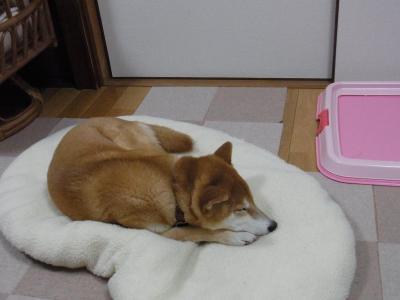 寝るっきゃ…ない!