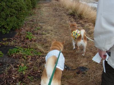 i一緒に お散歩