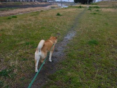 いざ、お散歩!