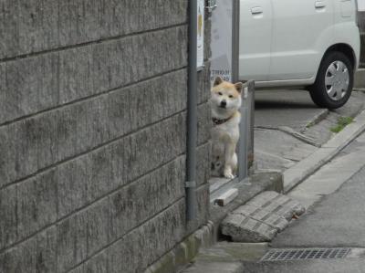 これから お散歩?