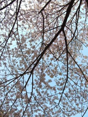 花越しに仰ぐ空