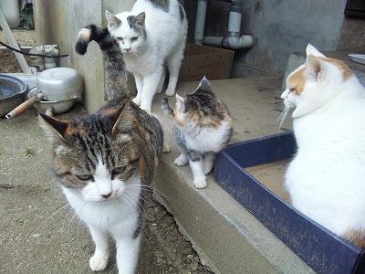 野良猫パラダイス