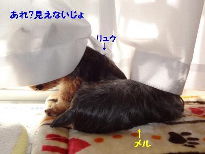 20111218001037.jpg