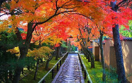 秋 通り道