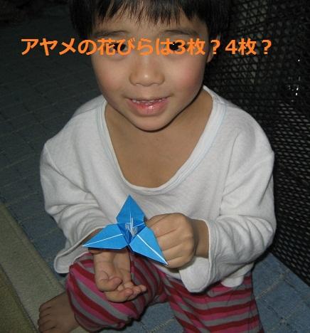 origami_ayame_28.jpg