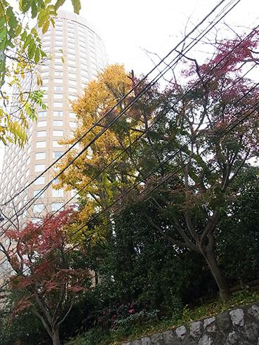 takanawaicyouRIMG0425.jpg
