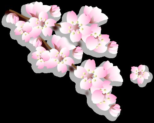 sakura-hanamiic2.png