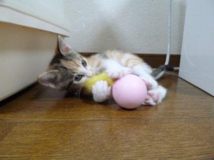 ボール[1]