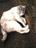 cat3.jpeg