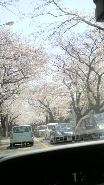 2012-0408-sakura_convert_20120409142024.jpg