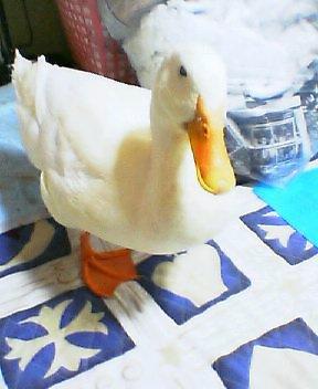 2012-0412-heiji1.jpg