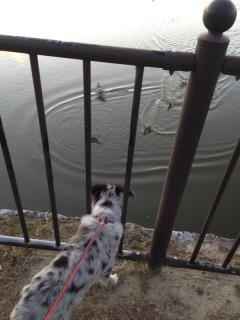 池をのぞき・・