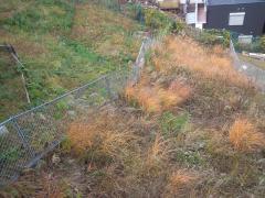 庭の除草状態
