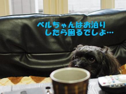 2012_0109_161140-P1093288.jpg