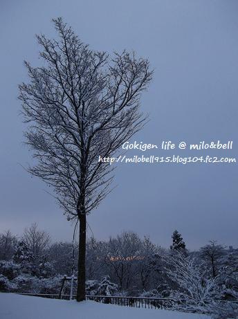 2012_0128_071503-DSCF2194.jpg