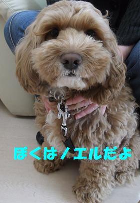 2012_0415_111841-DSCF2889.jpg