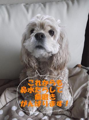 2012_0418_163152-DSCF2912.jpg