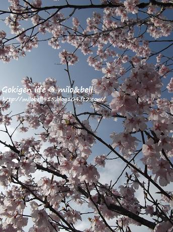 2012_0424_072212-DSCF2916.jpg