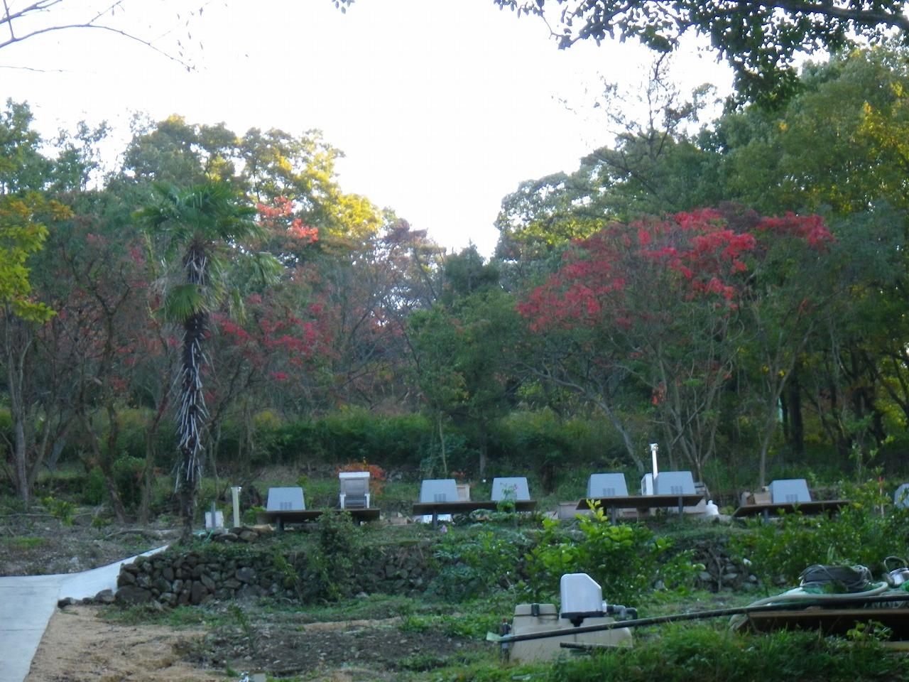 養蜂場からの紅葉風景