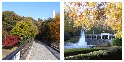 相模原公園(2013_11)