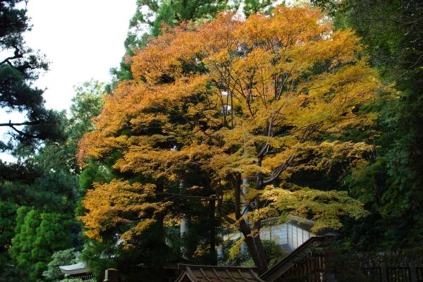 20111126_07_sennyuuji.jpg