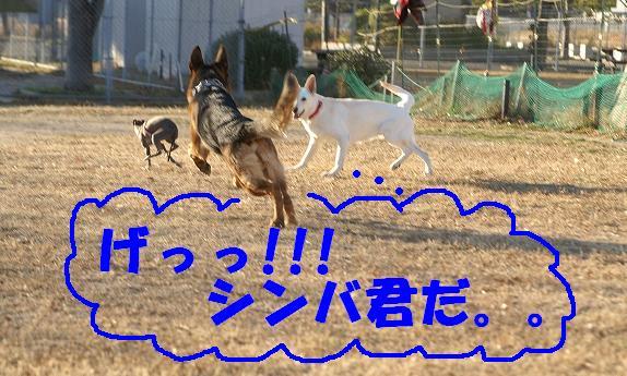 s-PICT0191.jpg