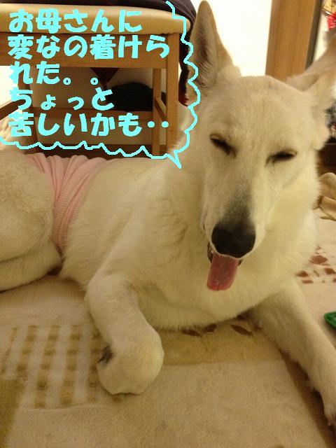s-hara1IMG_8149.jpg