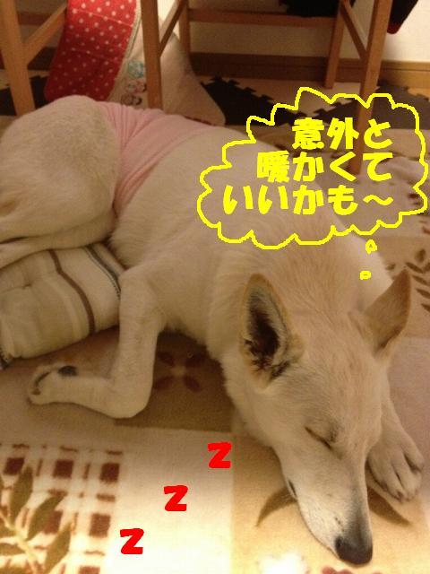 s-hara2IMG_8795.jpg