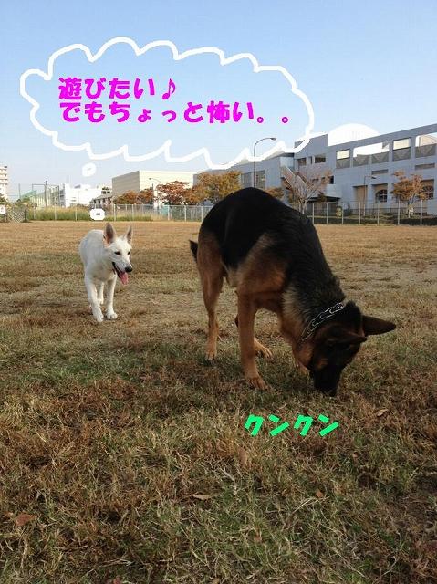 s-sinba2IMG_3718.jpg
