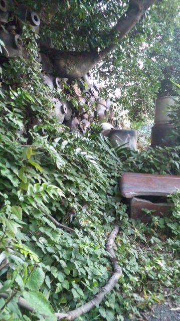 自然と土管、カワラ