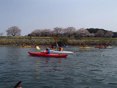 H24sakura0022.jpg