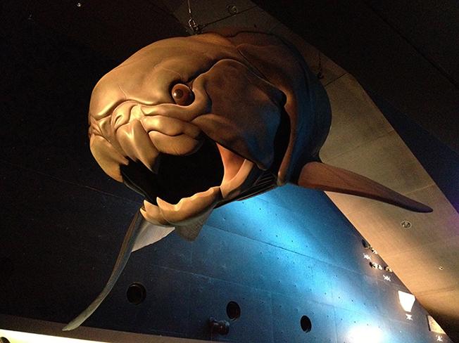 02古代魚模型2