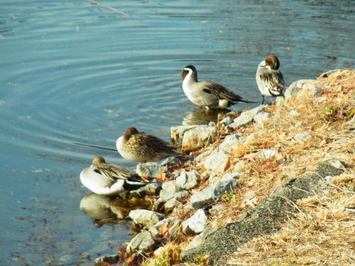 140118-202水鳥(S)