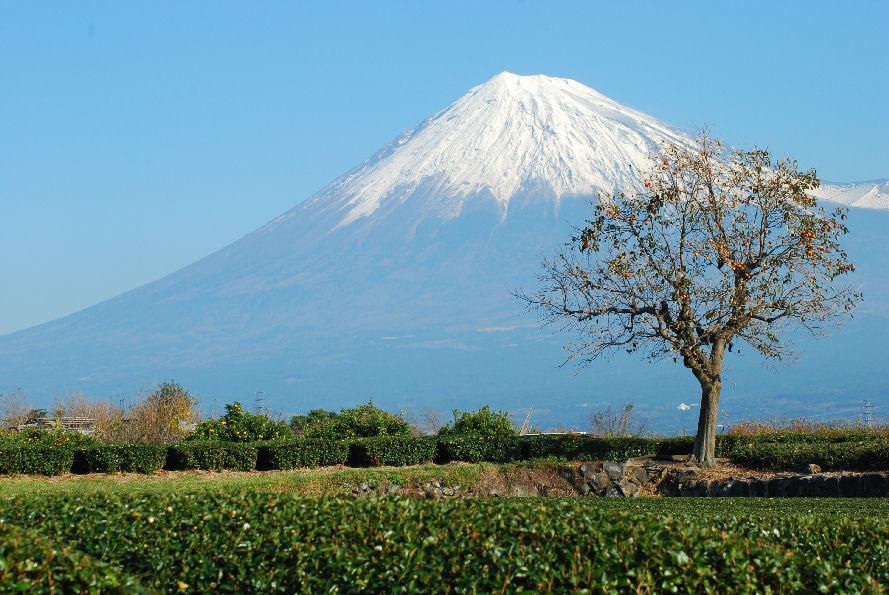 富士と柿の木