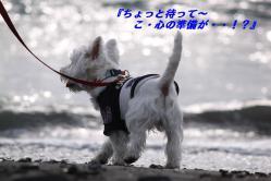 IMG_3075-1.jpg