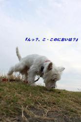 IMG_3099-1.jpg