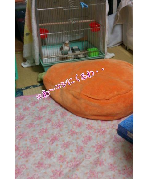 20121025-010152.jpg