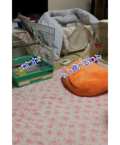 20121029-214358.jpg