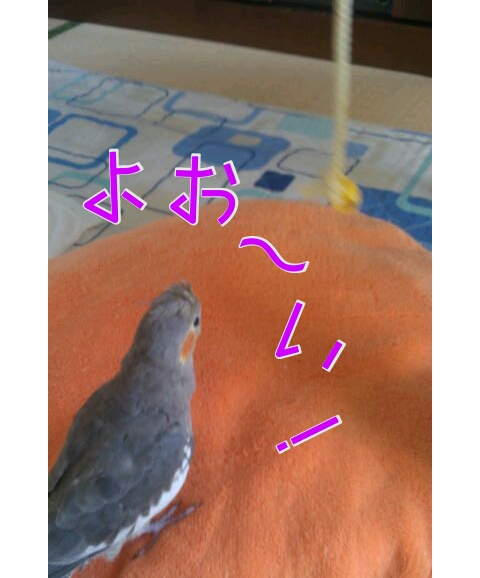 20121106-232716.jpg