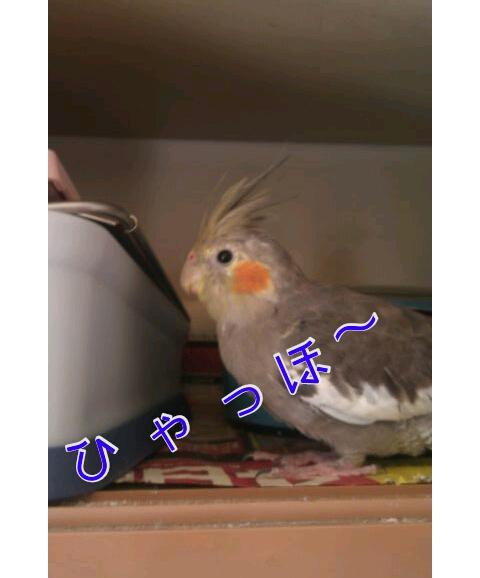 20121114-225748.jpg