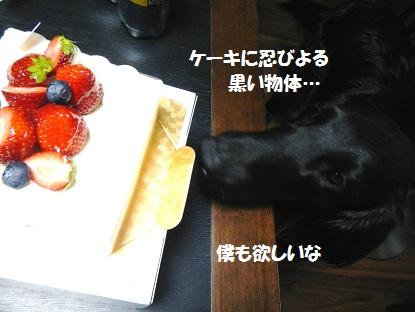 201315ke-ki.jpg