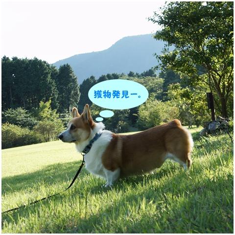 千条の滝からの湖尻水門【23.9.8】 NO23